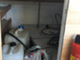 moottorivene-hydrospeed