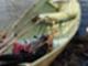 soutuvene-muu-merkki